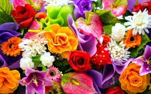 Colorful-Flowers-Wallpapers